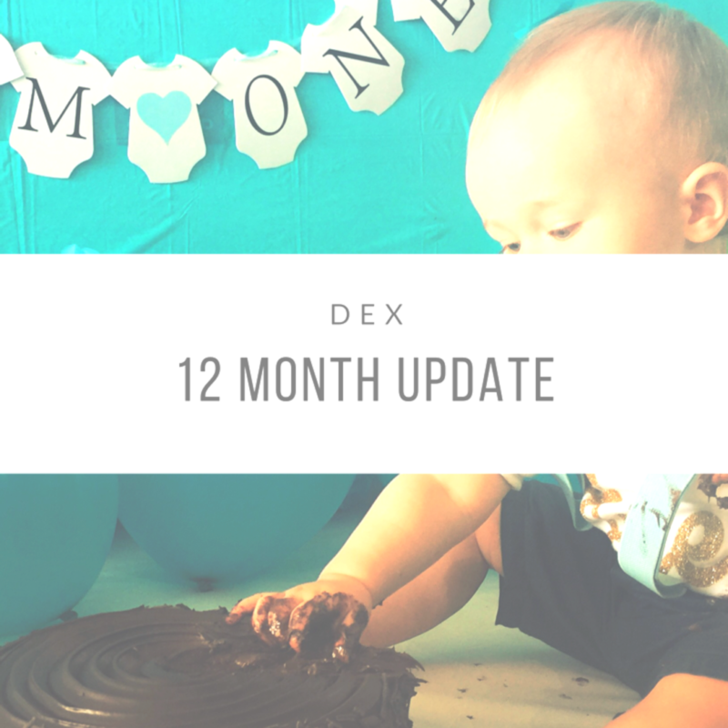 Dexter's 12 Month Update