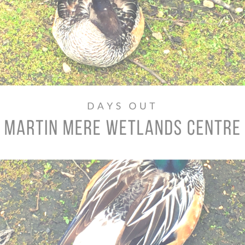 Days Out: Martin Mere Wetlands Centre