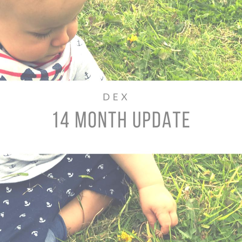 Dexter's 14 Month Update