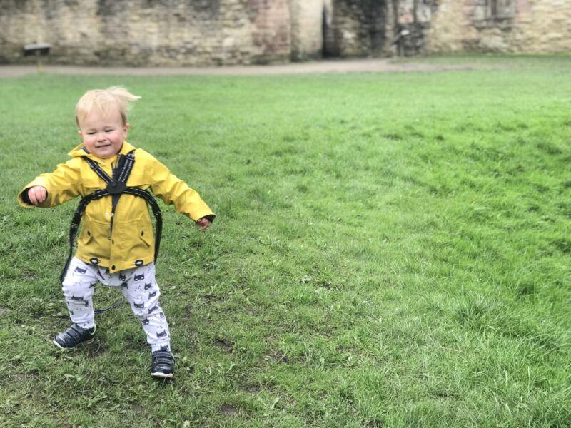 Dexter in a yellow coat walkinmg on the grass in Ludlow castle