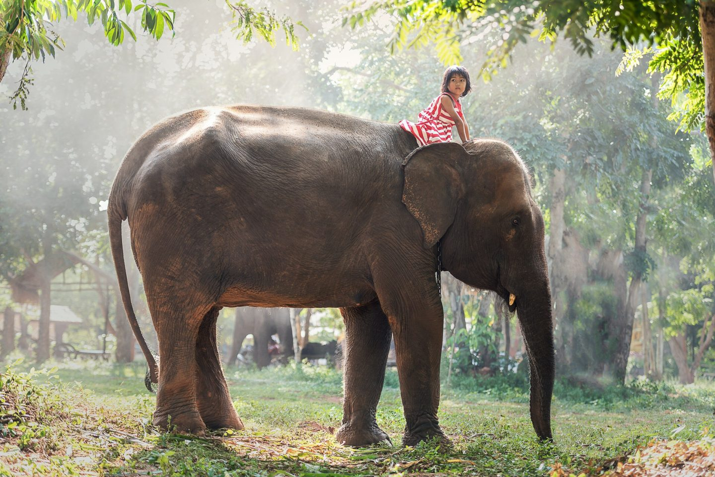 child riding on an elephant in the junge