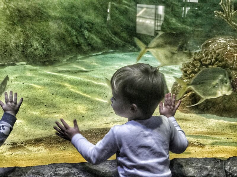 Dexter pressing his hands against the glass in the sea life centre birmingham looking at fish passing by