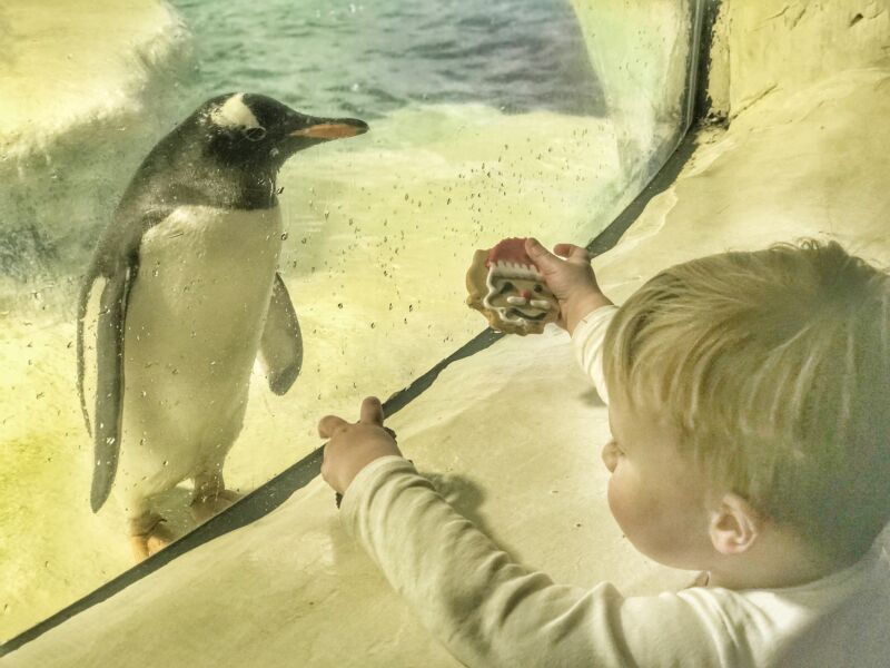 Dexter at the sea life centre birmingham looking through the glass at a penguin which is looking back at him