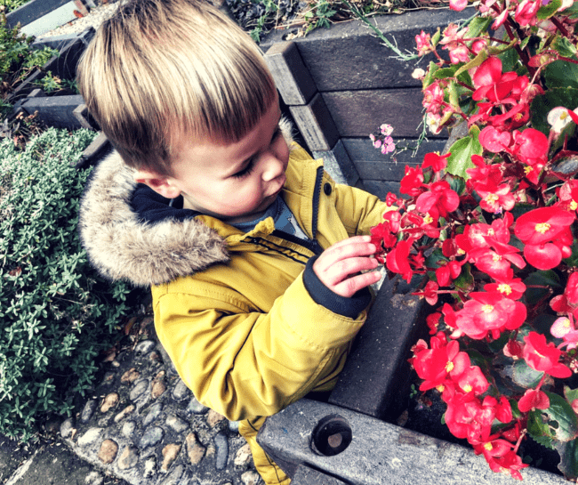 Dexter looking at red flowers out in the garden