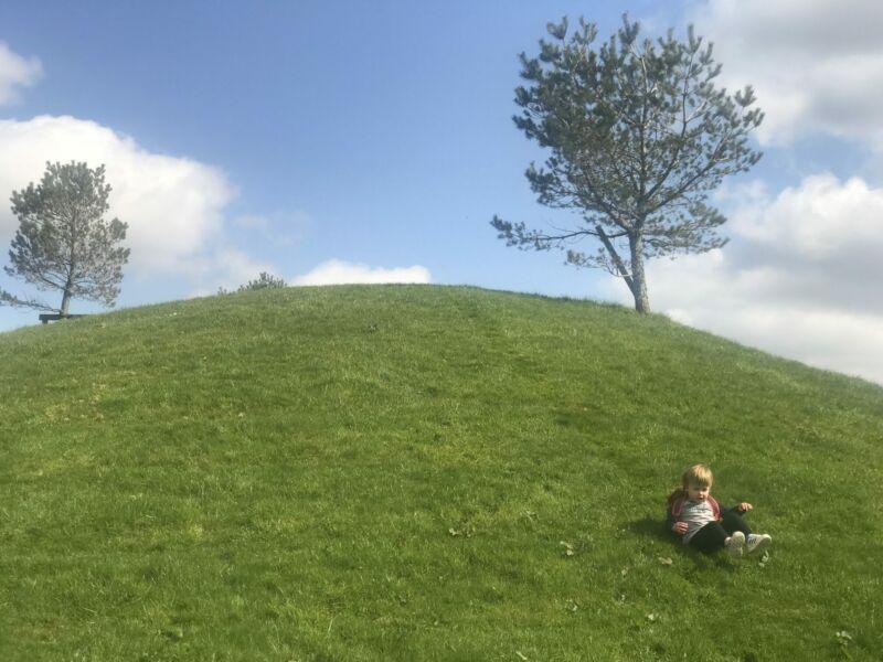 Dexter rolling down a hill in bluestone wales