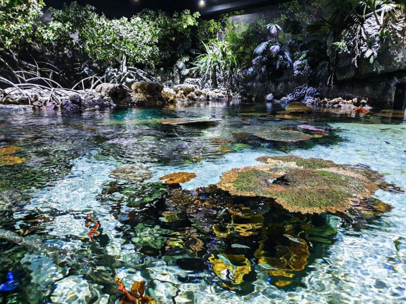 A huge aquarium at the Deep in Hull