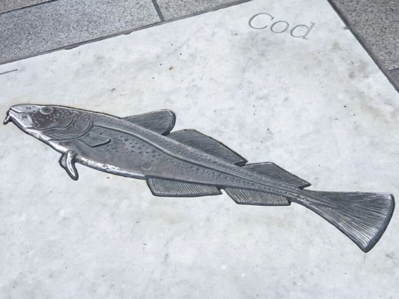 Cod fish on the floor as part of fish trail in Hull