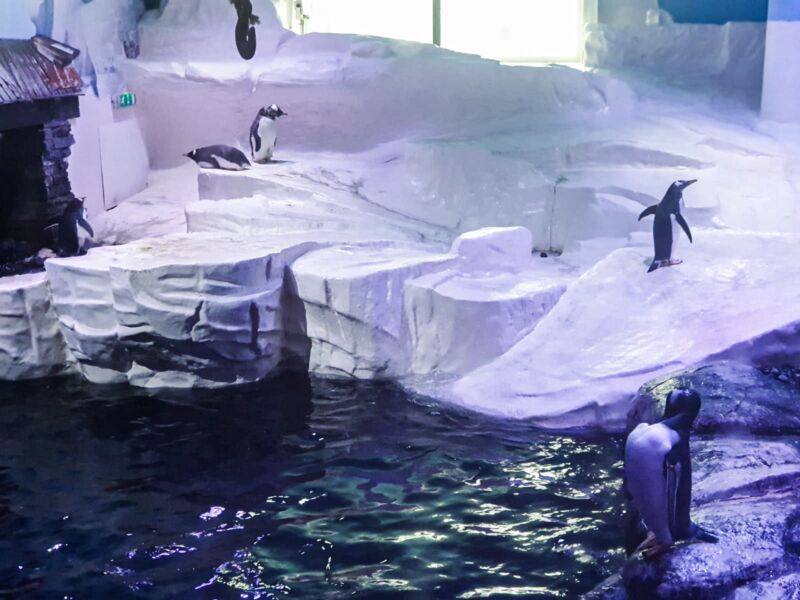 penguins playing in the deep hull