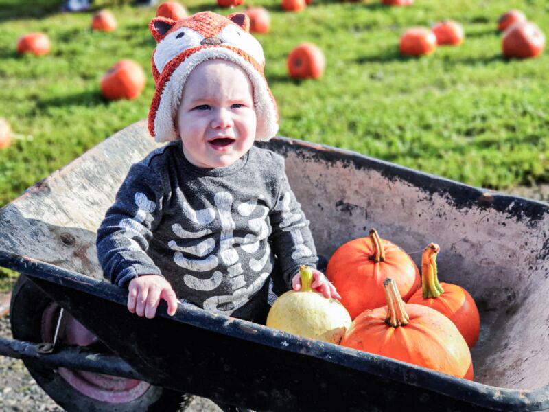 Felix say in wheelbarrow with pumpkins next to pumpkin patch