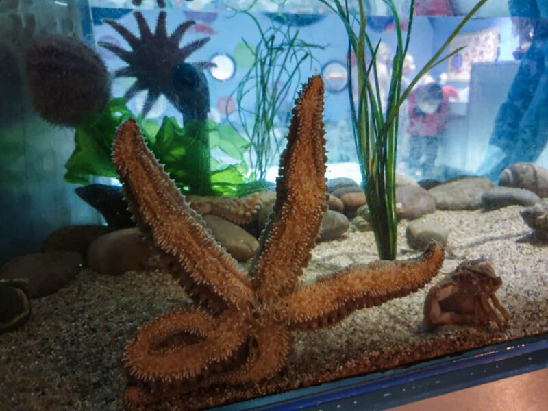 Star fish in a tank in the Deep, Hull