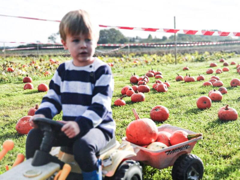 Dexter riding a toy tractor at a pumpkin field with a pile of orange pumpkins in his trailer