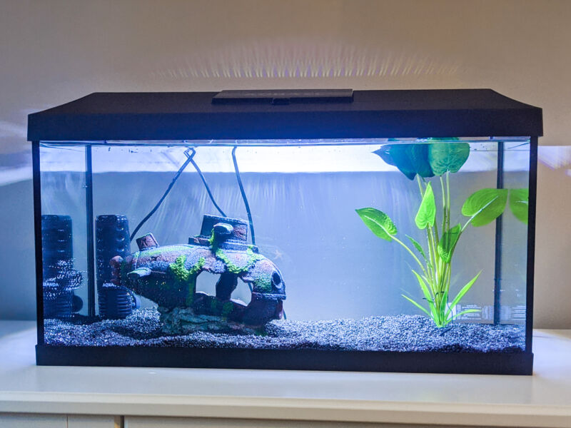 Our new fishtank