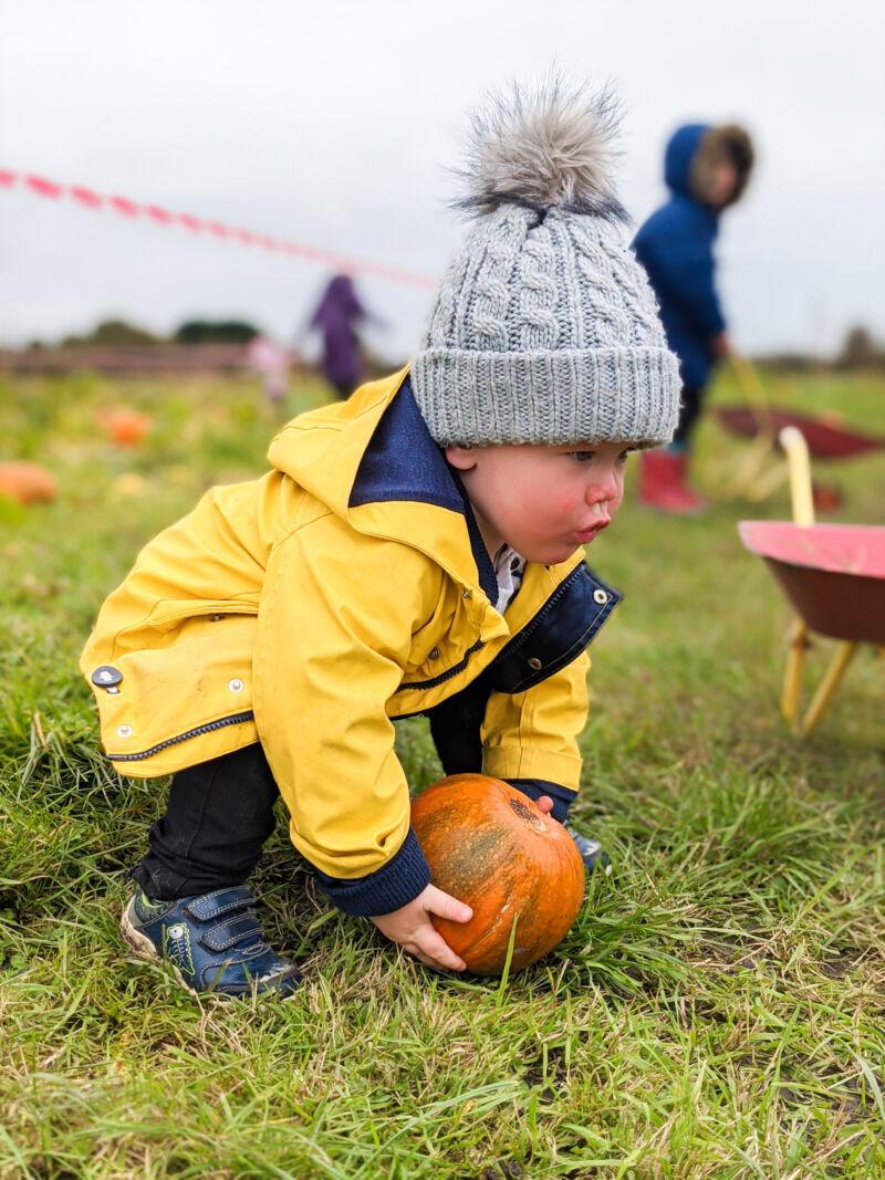 Felix lifting a pumpkin at the pumpkin patch