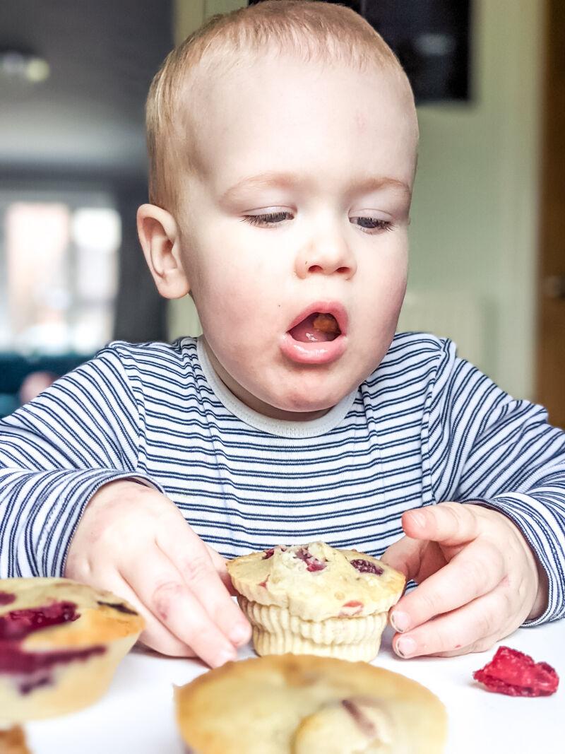 Felix eating a blw raspberry muffin
